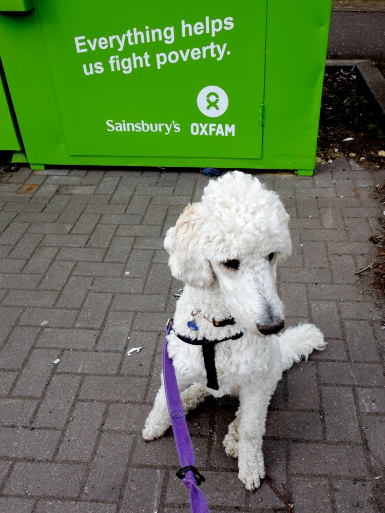 piper and oxfam