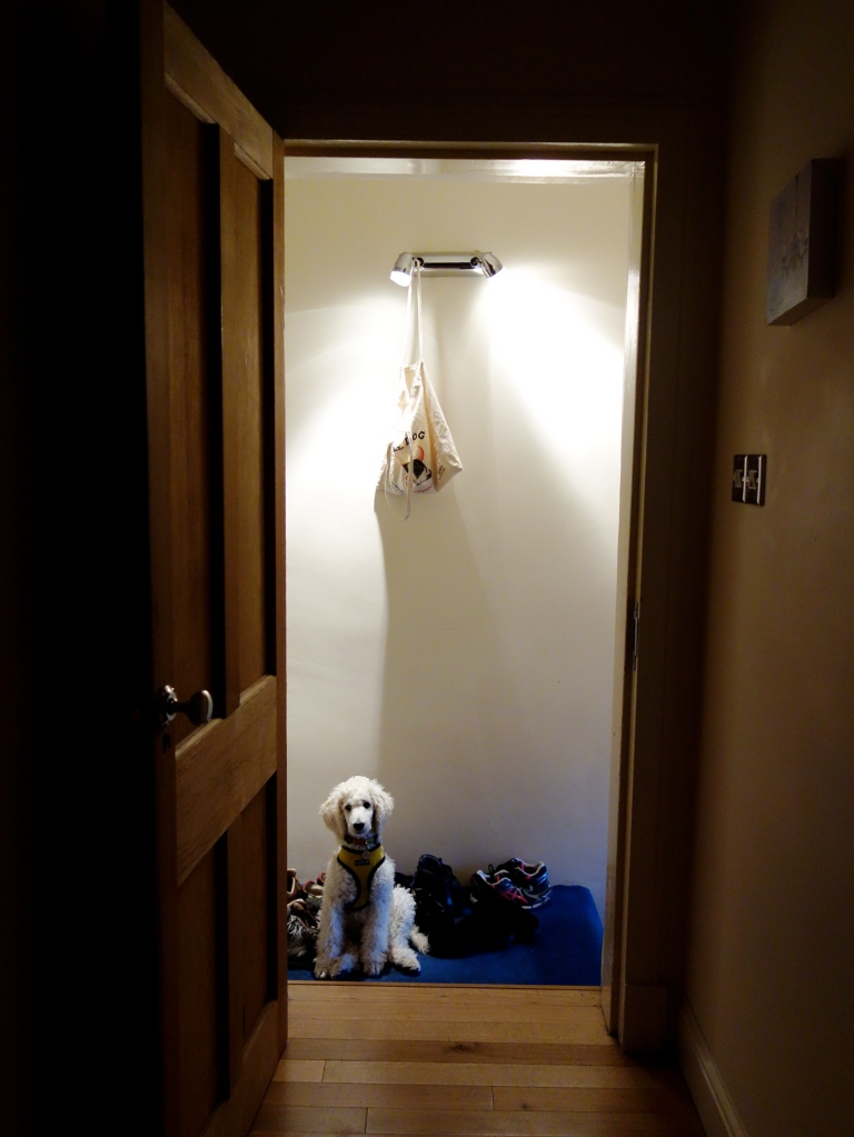piper in the doorway 4 months