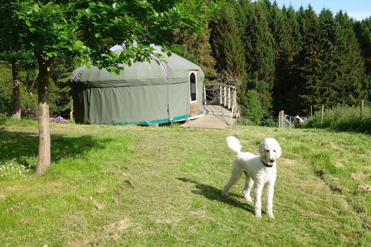 Piper and yurt